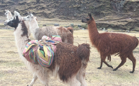 Ecotourism: What I Learned from Touring Peru