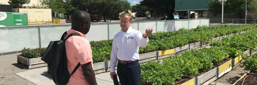 Fresh Food with Benefits: Urban Farming Grows Wellness in South Dallas