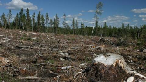 deforestation_ebola600x350